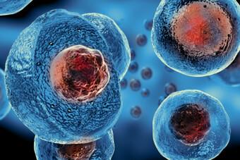 Φωτογραφία βλαστοκυττάρων